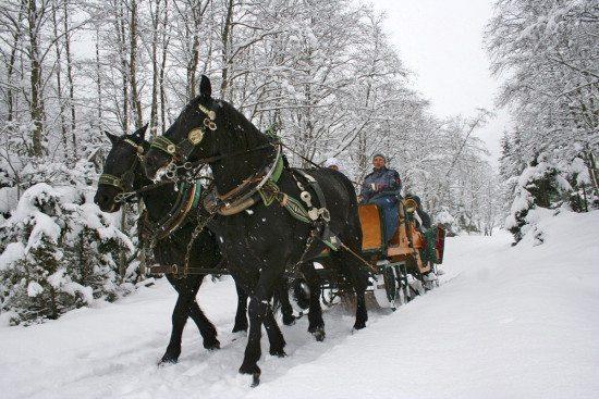 Pferdeschlittenfahrten - Großarltal, Salzburger Land